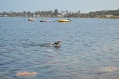 Swimming Tres Amigos