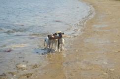 Tres Amigos - Jorge's Dogs