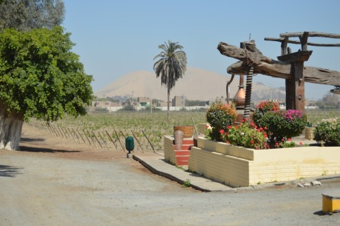 Winery and Sand Dune