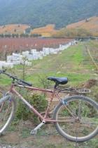 Bike and Grapes