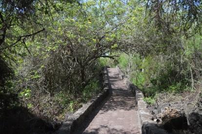 Tortuga Bay Path