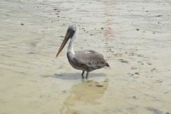 Marine Bird