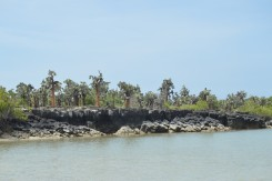 Cacti Grove