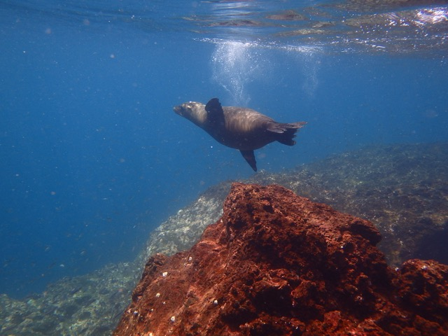 Frolicking Sea Lion