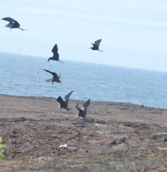 Bird Attack!