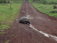 Tortoise Right of Way