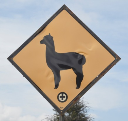 Hmm- Alpaca or Llama?